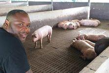 Jean-Hubert François, producteur de viande de porc à Montsinéry