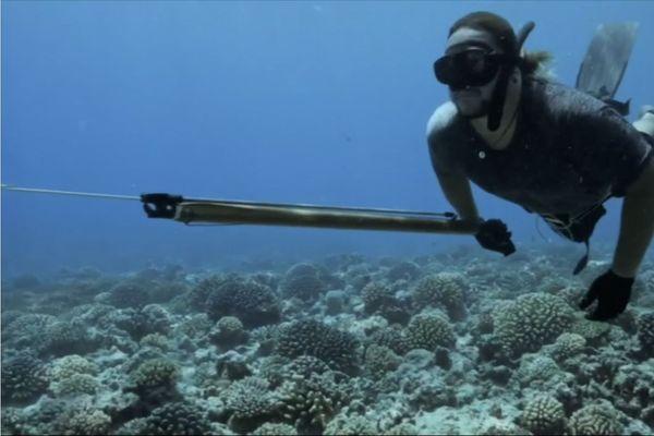 Ils se battent pour sauver les coraux