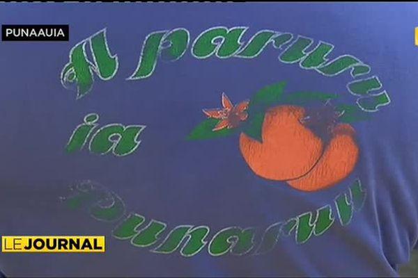 200 cueilleurs à l'assaut des orangers de Tamanu
