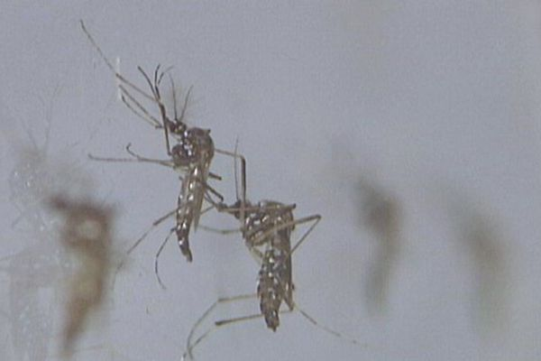 zika annonce épidémie officielle
