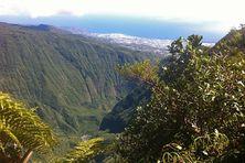 Vue de la Forêt de la plaine des fougères à La Réunion