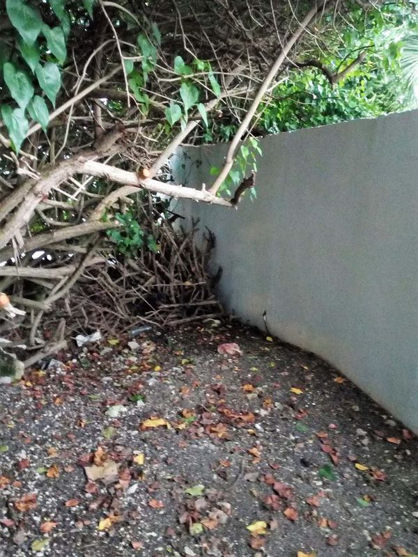 Mur La Coulée 2
