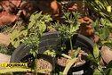 A la découverte de l'agriculture bio