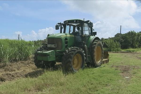 Tracteur et champ de canne