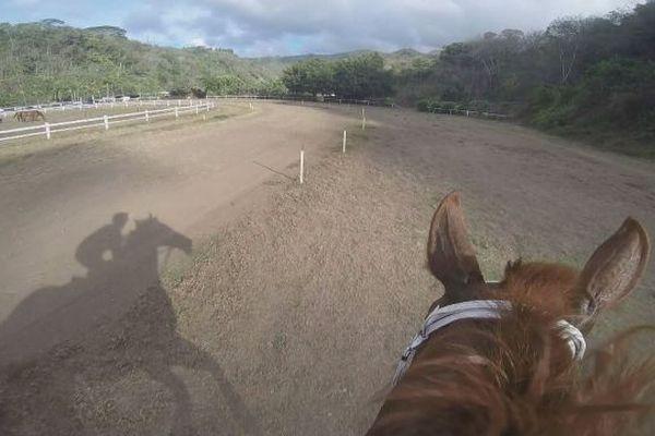 hippisme / chevaux