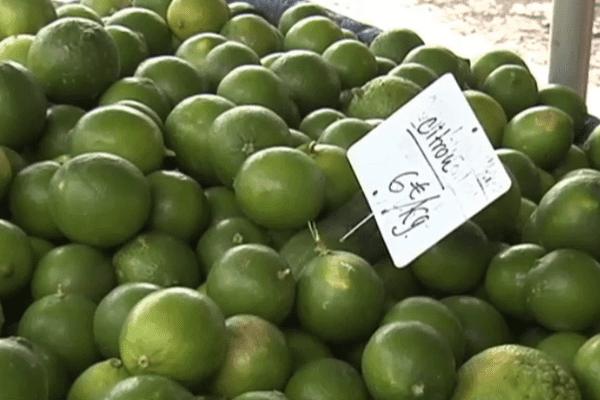 Etale de citrons en Guyane