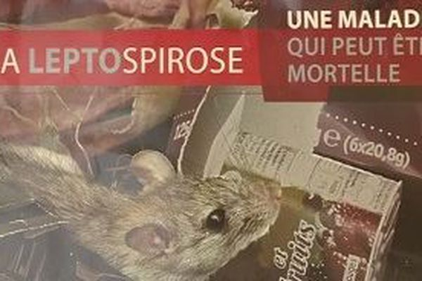 affiche prévention leptospirose