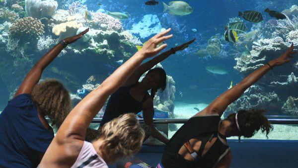 Yoga à l'aquarium