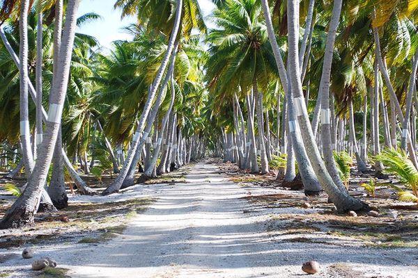Sur les routes des Tuamotu, il faudra rouler avec une capacité de conduite