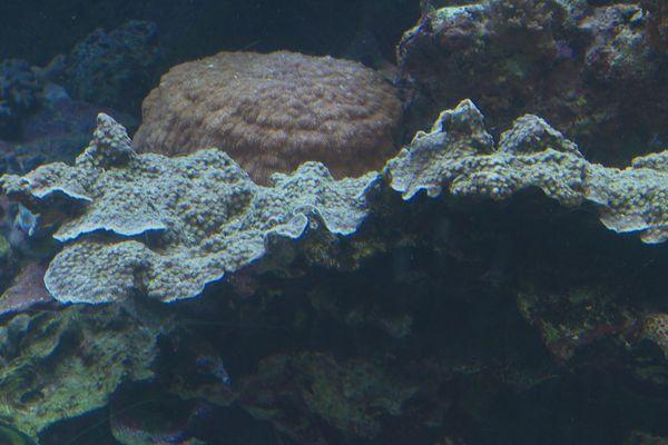 Corail. Aquarium des lagons