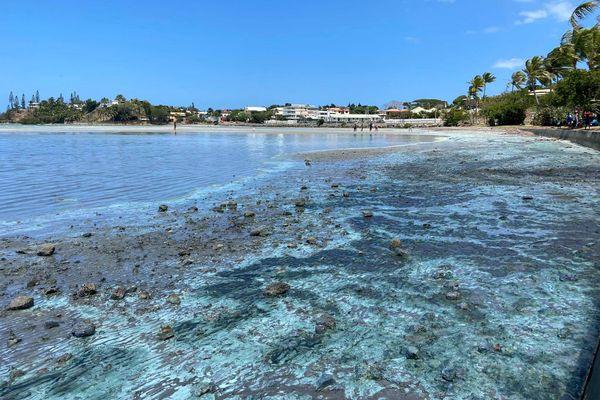 Pollution à Magenta plage, 26 septembre 2020