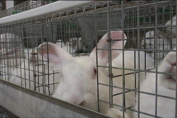 viande péi filières animales élevage lapins 040919