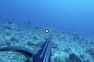 Pêche sous-marine : sa syncope est filmée...