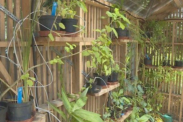 Jardin nursurie ecole du jardin planétaire plantes médicinales au CHU 090319