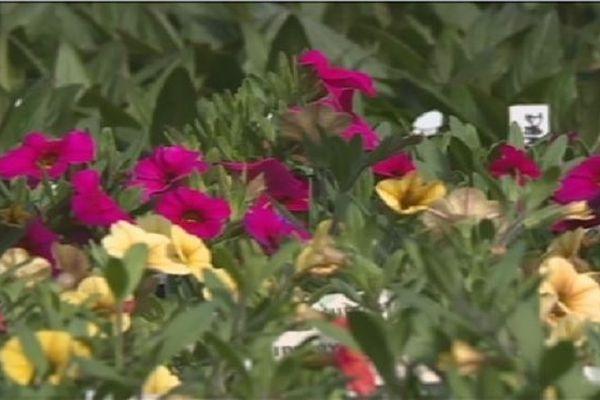Plants de légumes et fleurs à foison au coeur des serres de Miquelon