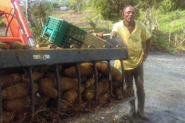 agriculeur val d'or igname