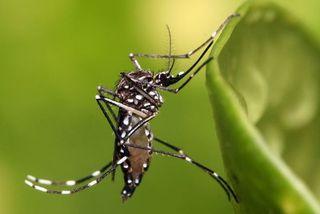 Le vaccin contre la dengue de Sanofi autorisé dans l'UE