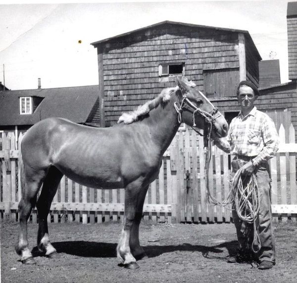 François Detcheverry chevaux