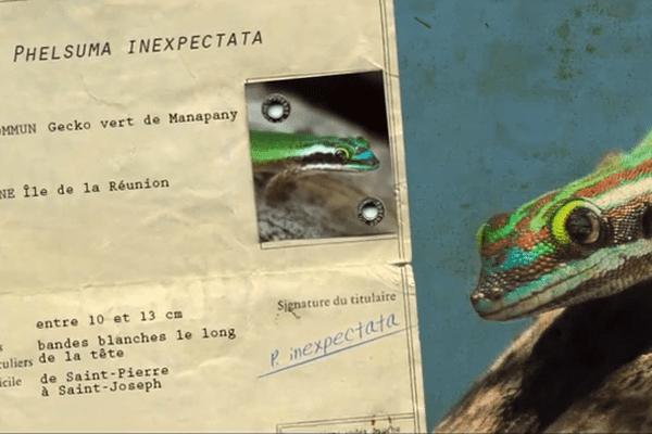Carte d'identité du gecko de Manapany