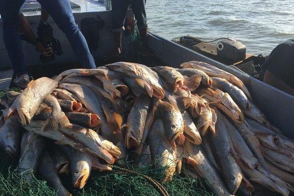 Pêche au large d'Iracoubo