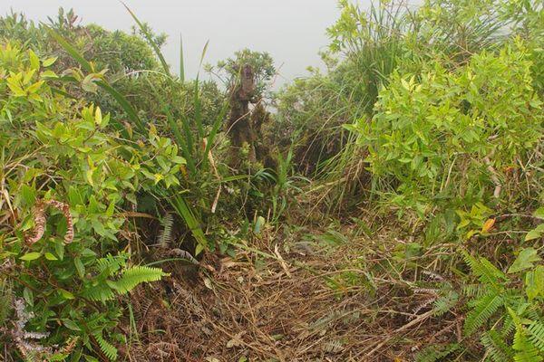 Dégradations sur le Mont Temehani : une plainte déposée