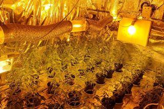 "Culture de cannabis ""indoor"""