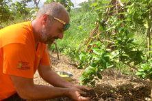 Ben Bugeon, agriculteur biologique à La Foa.