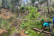 Il y a 20 ans, cette parcelle était dépourvue de végétation. Aujourd'hui, la forêt se reconstitue.