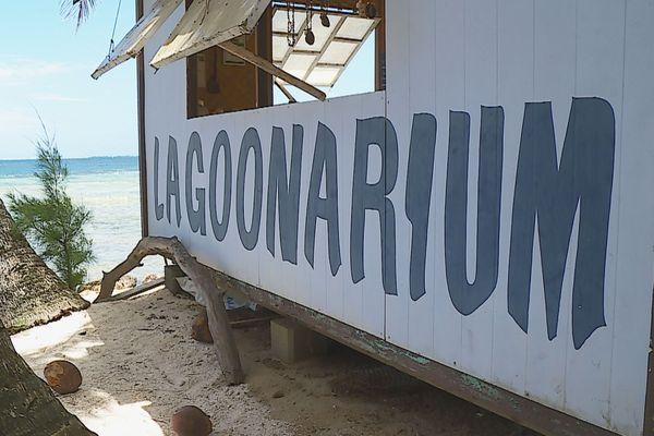Attaque de requin au lagoonarium