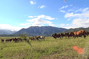 Viande aux hormones en Nouvelle-Calédonie: EPLP persiste et signe, le SIVAP dément!