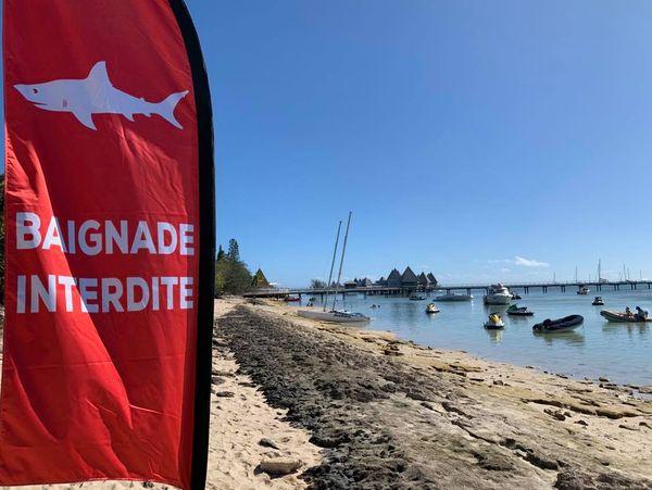 Après l'attaque de requin à l'îlot Maître, drapeau baignade interdite