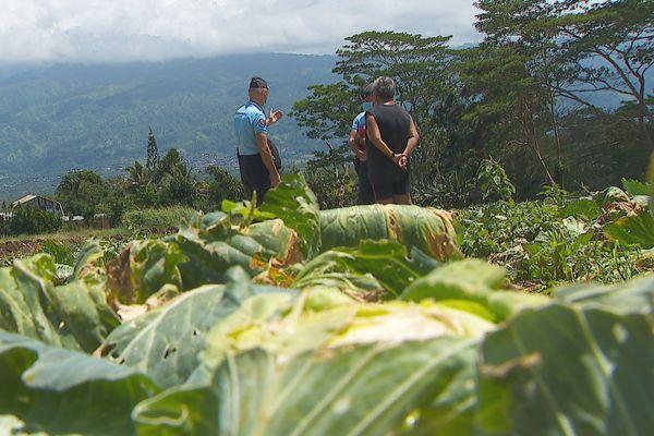 Des agriculteurs victimes de vols à répétition dans leurs champs