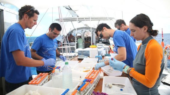 © The coral team treating samples after their dive -® Sarah Fretwell - Tara Expeditions Foudation