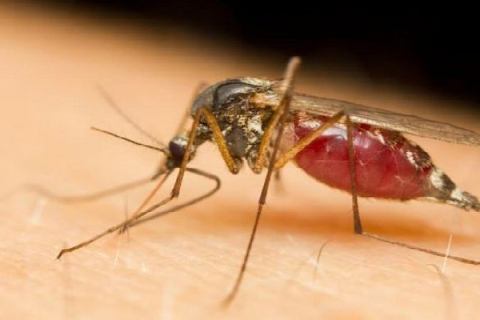 Réunion : la dengue s'intensifie